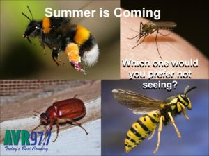 Summer Insects